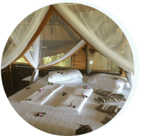 lake albert safari lodge accommodation